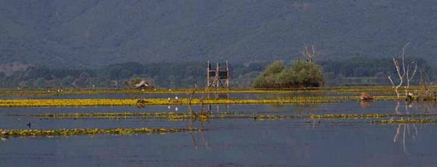 Η Χλωρίδα της λίμνης Κερκίνης